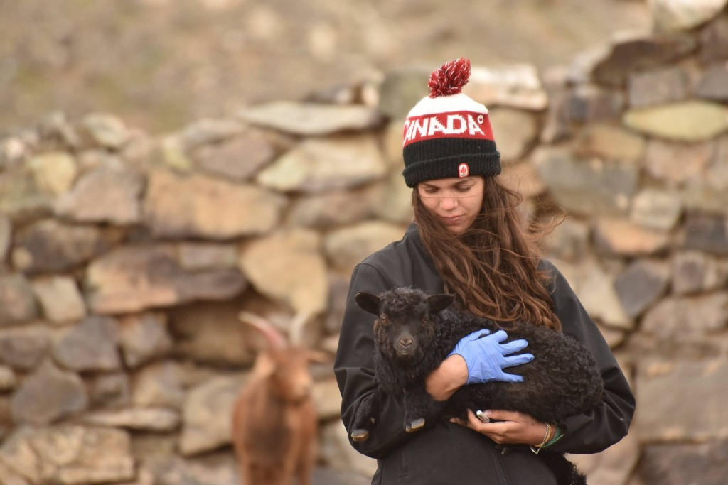Sam Lawton, Class of 2017 with a lamb in Mongolia. (Photo: Soyolbolod Serguleng)